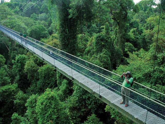 Treetop Walk | Things to do in Singapore
