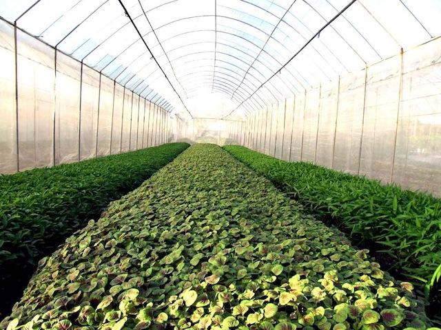 Vegetable Farm Visit