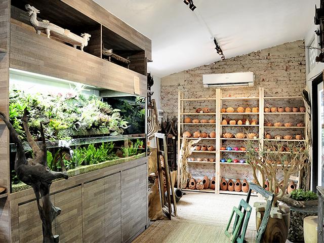 A Green House Interior