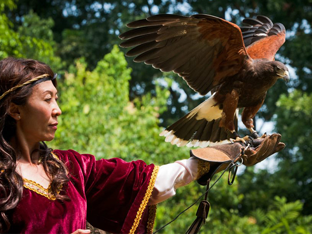 Catch thrilling bird shows at Jurong Bird Park