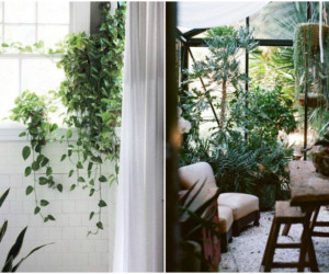 Turn every corner of your house into a green spectacular! (Credit:Far East Flora via Facebook)