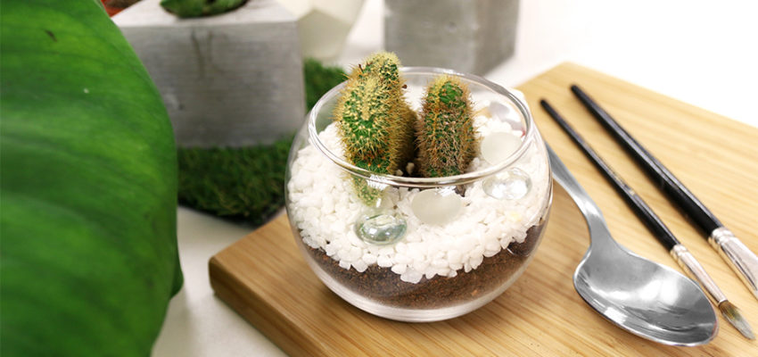 Terrariums is  a great addition to your series of home decors.