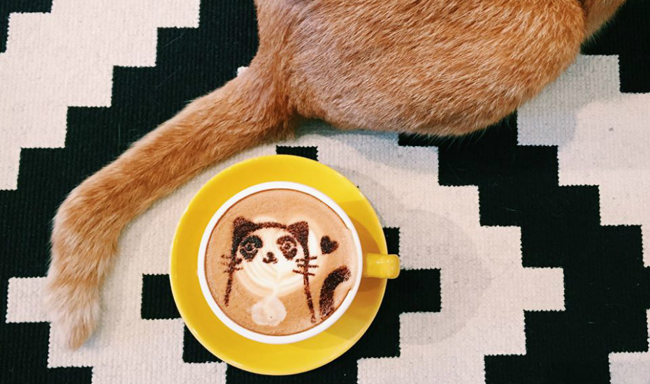 Cat cafes in Singapore: Purrfect spots for coffee, snacks, and cute kitties