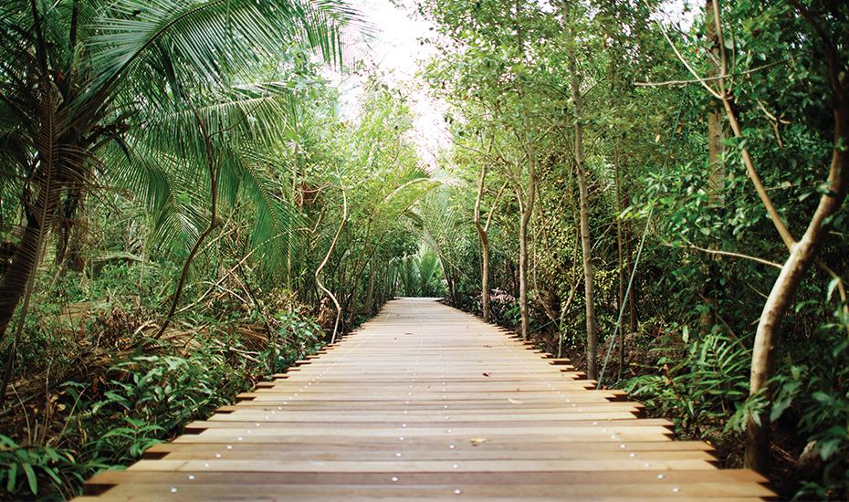 Explore Pulau Ubin and enjoy its beautiful greenery (Credit: NParks)