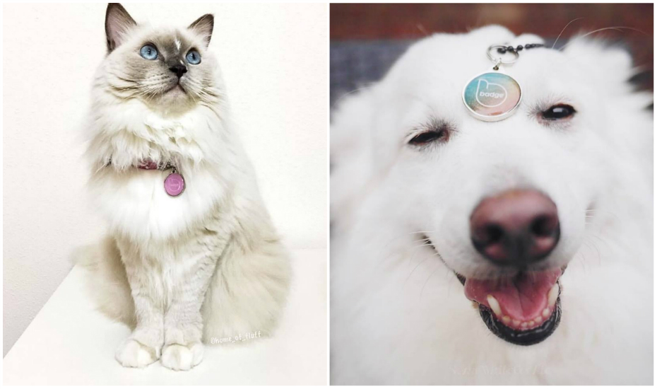 Pet Widget's wearable ID tag, Badge, is suitable for both pups and kittens (Credit: @home_of_fluff [left] and @somewhitecookie [right])