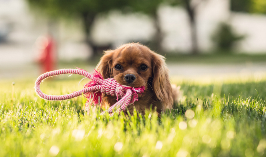 Pet Widget: You'll never lose your pet again with this furry-friendly app