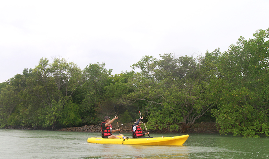 Kayaking in Singapore: How to kayak through the mangrove forests of Pulau Ubin