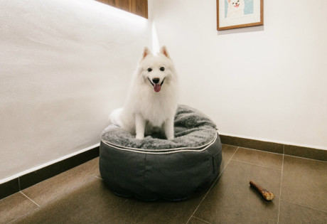 Pet hotels with daycare services and boarding kennels for cats and dogs