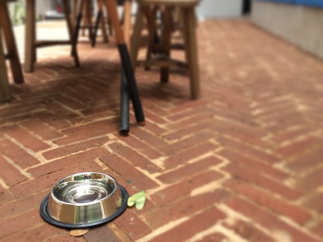 The outdoor area at Turning Point Coffee is dog-friendly. Photo credit: Turning Point Coffee