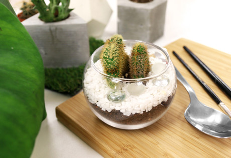 Terrariums make a great addition to your series of home decors.