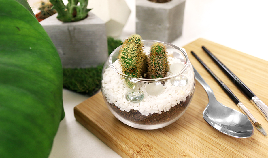 How To Make A Terrarium In Jakarta Our Handy Diy Guide Honeycombers Jakarta
