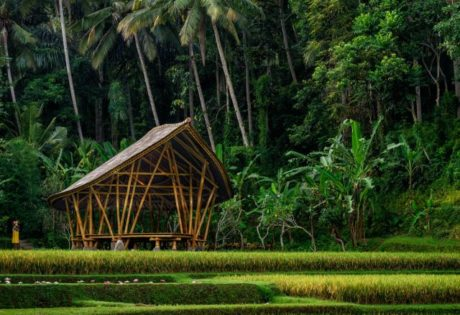 Yoga in Ubud: Four Seasons Sayan