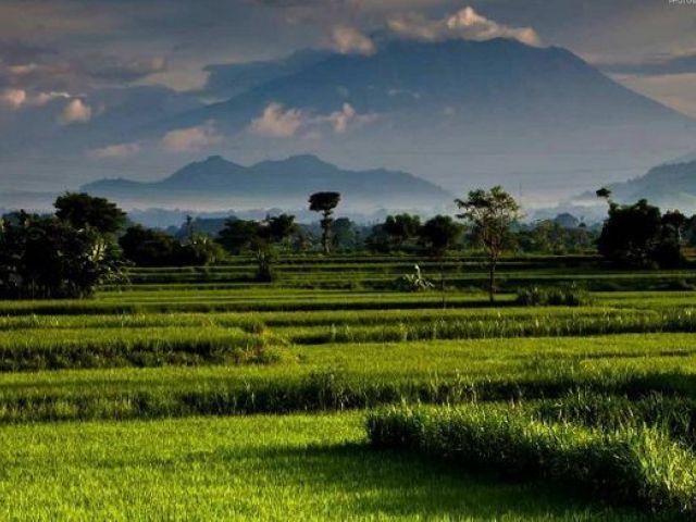Bali island guide:  Canggu