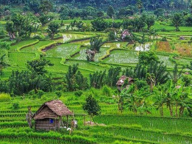 Bali island guide:  Ubud