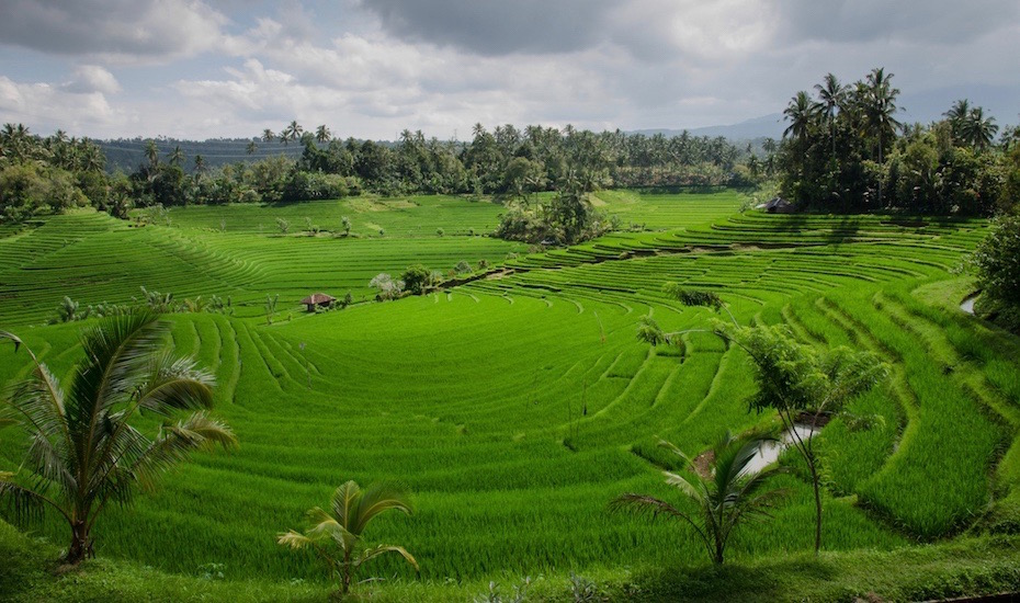 Watch this! A stunning drone video of Bali's iconic rice fields, sacred mountains and bright blue oceans by Gypsy Bali