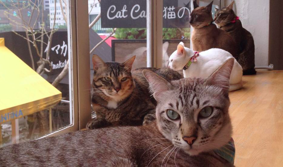 Cat Cafe Neko No Niwa (Credit: Cat Cafe Neko No Niwa via Facebook)