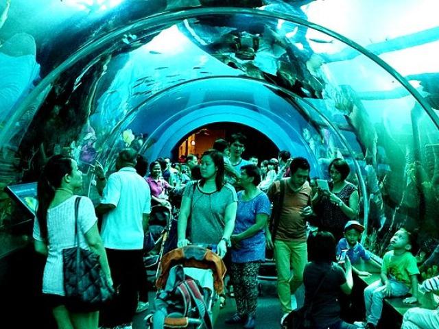 S.E.A. Aquarium | Resort World Sentosa