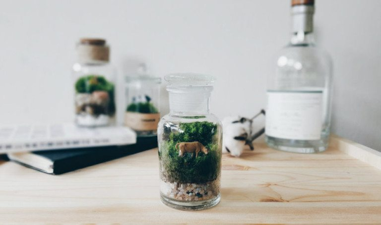 Greenify your home and office with these zen terrariums
