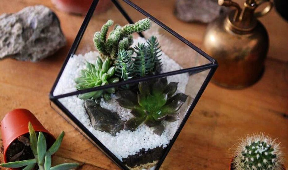 Terrariums in Singapore