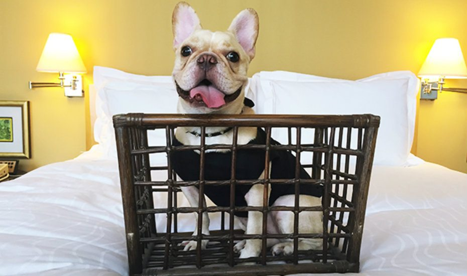 Pet-friendly hotels in Singapore: because nobody puts fur baby in a corner