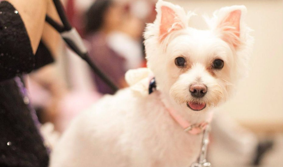 Pet-friendly hotels for the ultimate staycation with your cats and dogs