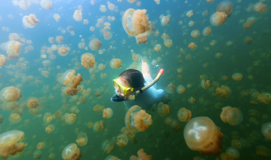 Swim with millions of stingless jellyfish on Pulau Kakaban, Derawan, Indonesia