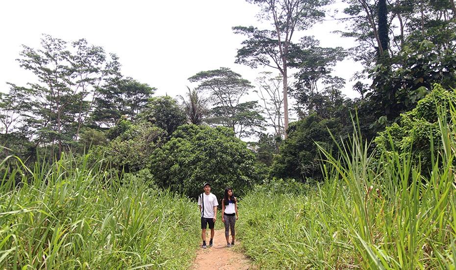 Chestnut Nature Park Singapore