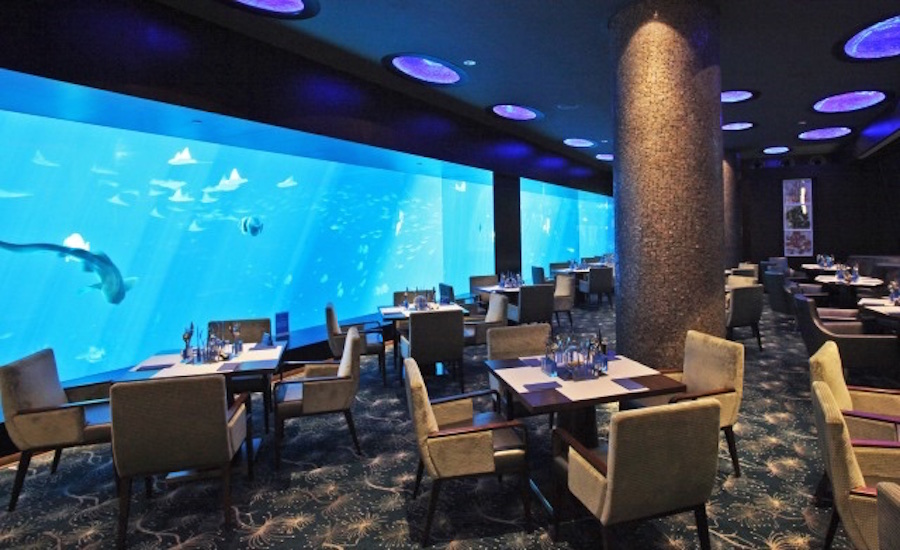 Dive deep with Cat Cora (Photo credit: Ocean Restaurant by Cat Cora)