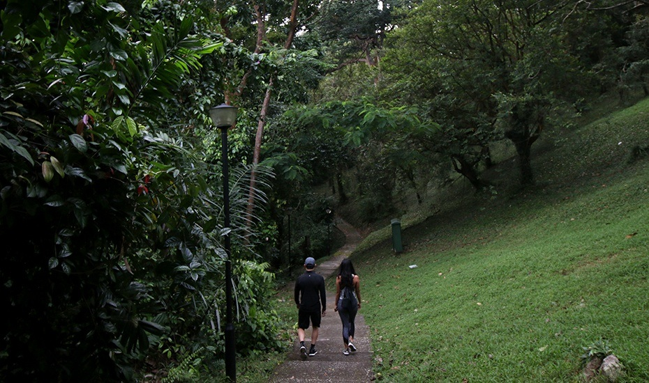 Yes you can go hiking in Singapore: nature trails to trek from Southern Ridges to Macritchie Reservoir
