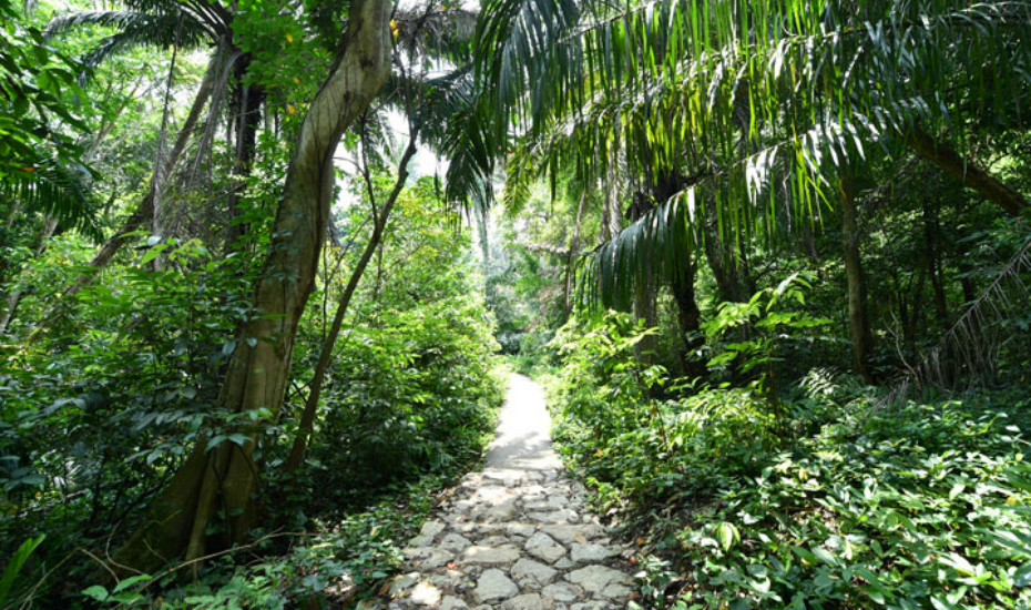 Hiking trails in Singapore: Windsor Nature Park is a new ...