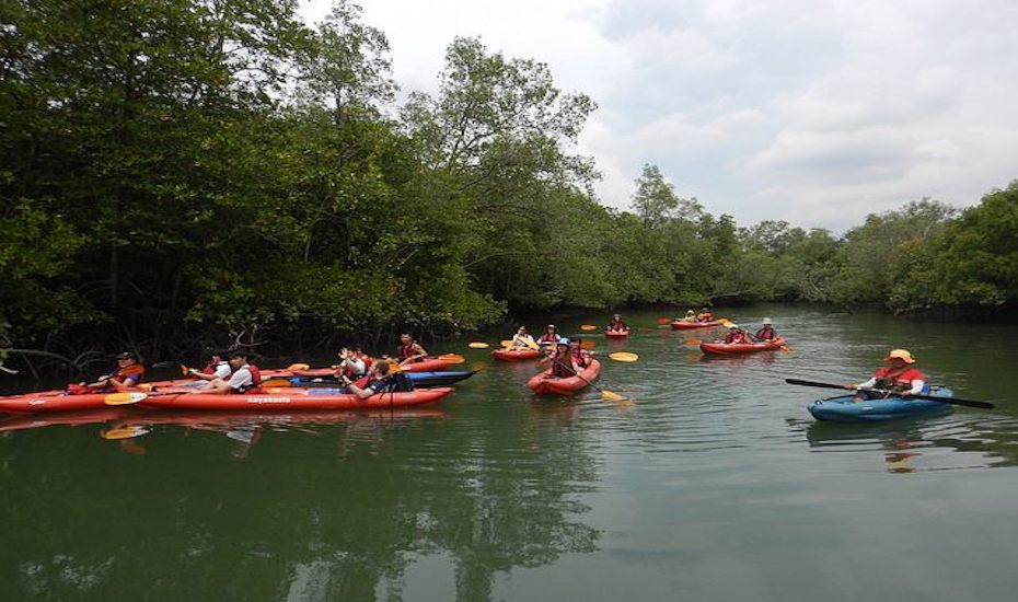 Experience kayaking through rivers and mangroves at Pesta Ubin