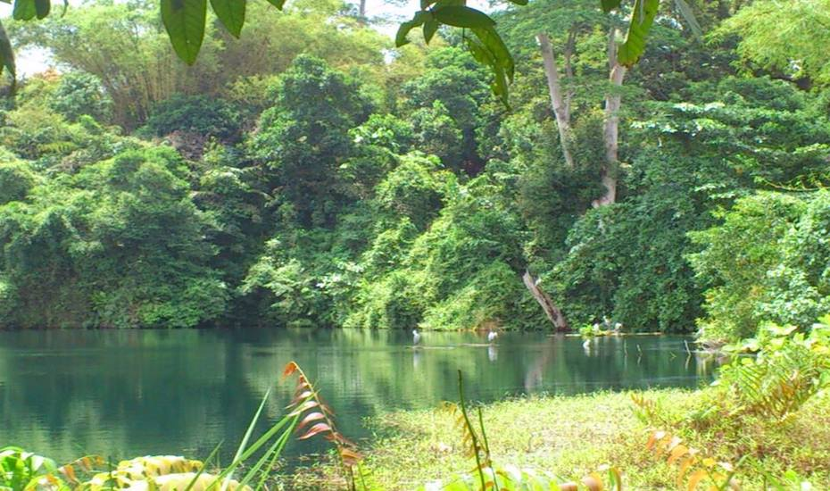 Enjoy sights of lush vegetation here at Pulau Ubin