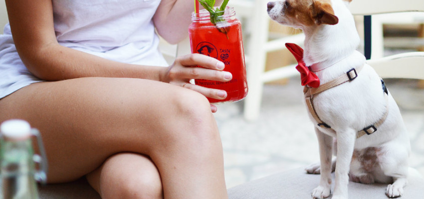Dog-friendly cafes and restaurants in Singapore for you and your pup