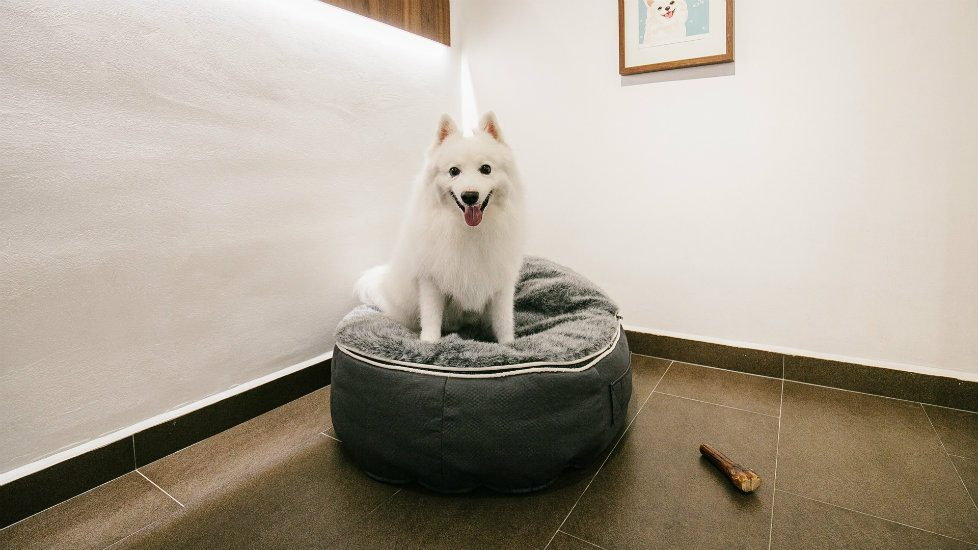 Pet hotels with daycare services and boarding spaces for cats and dogs