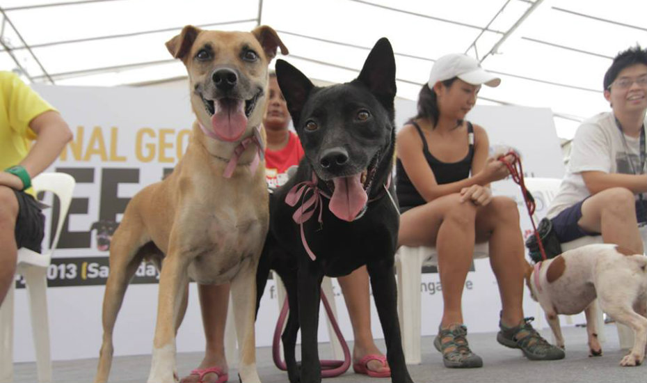 Causes for Animals Singapore (CAS) Animal Charities