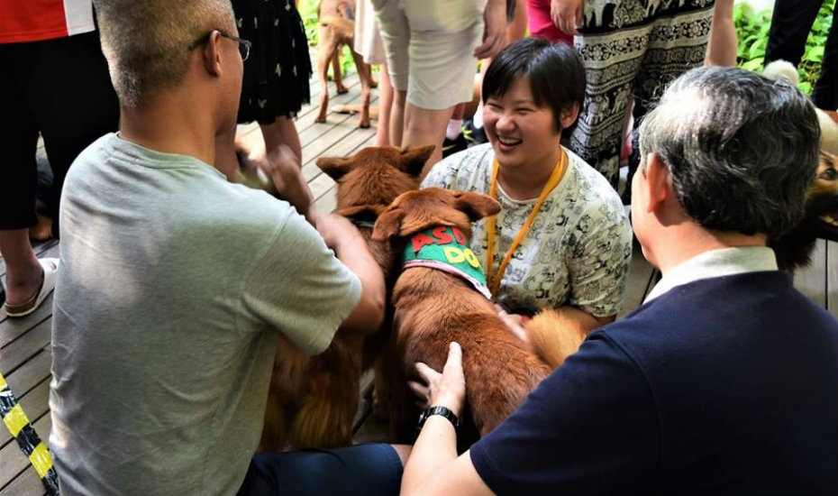 Action for Singapore Dogs (ASD)
