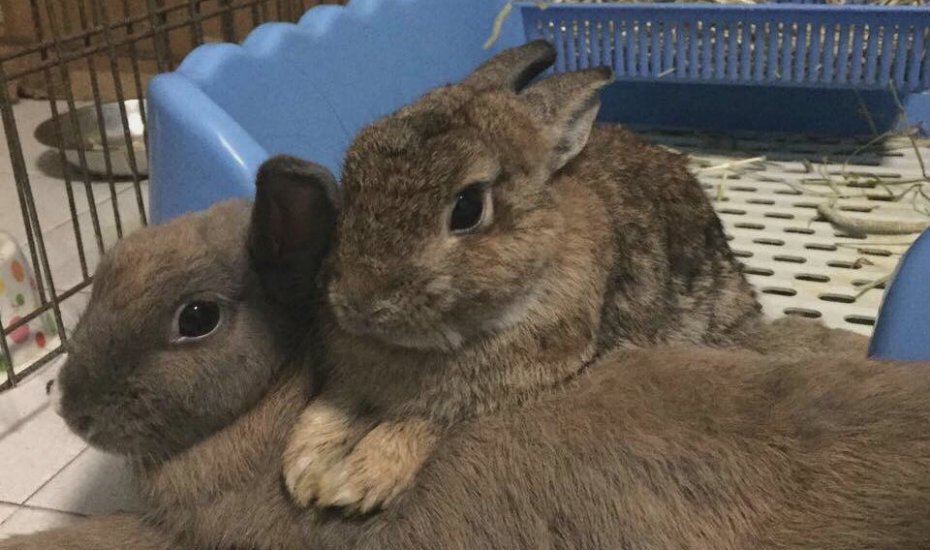 House Rabbit Society Singapore (HRSS) Animal Charities
