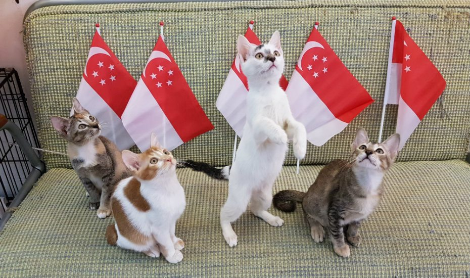 Cat cafe in Singapore