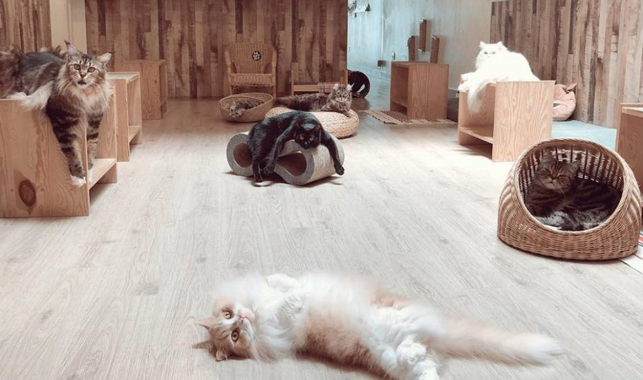 Cat cafe in Singapore | Things to do on a rainy day in Singapore