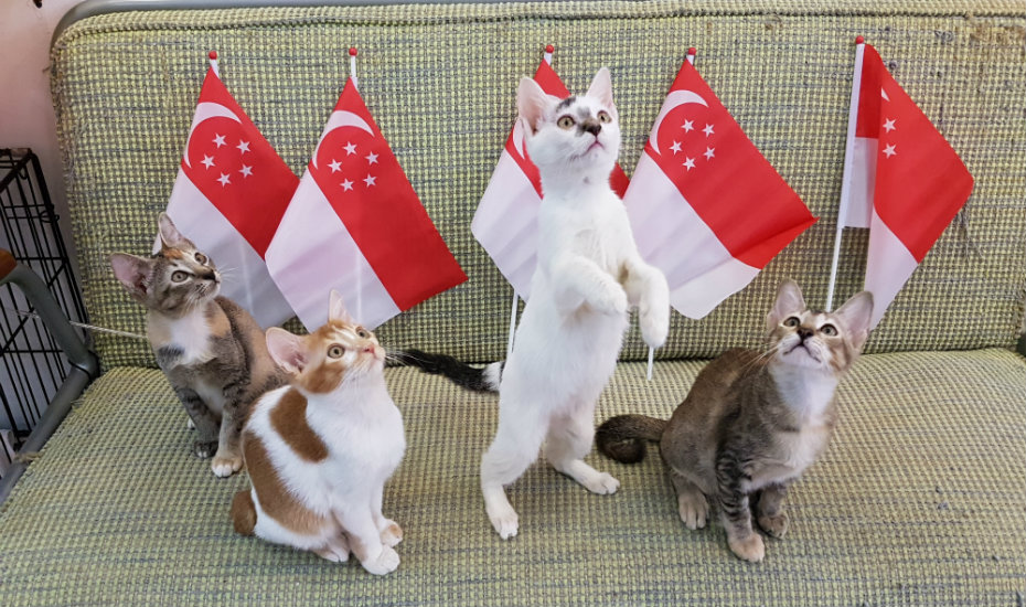Singapore's Cat Museum might be closing and its kittens need a home