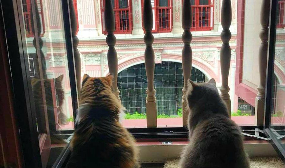 The Cat Museum throws a party at Keong Saik to save the cats