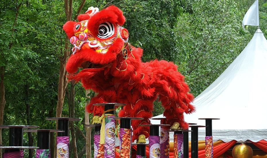 Lion Dance Honeycombers Singapore