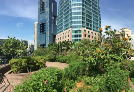 Urban farming in Singapore is on the rise (Photography via Edible Garden City)