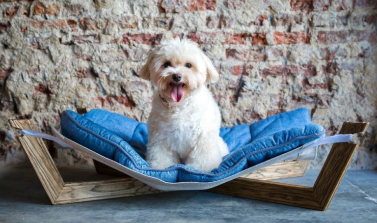 The coolest pet beds in Singapore for cats and dogs to snooze in