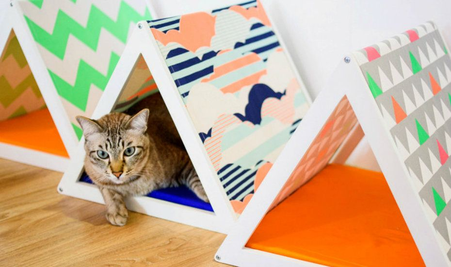 Goood Pet Collars | The coolest pet beds in Singapore for cats and dogs to snooze in