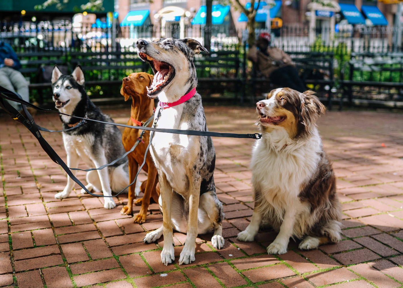 dog-friendly cafes in Singapore
