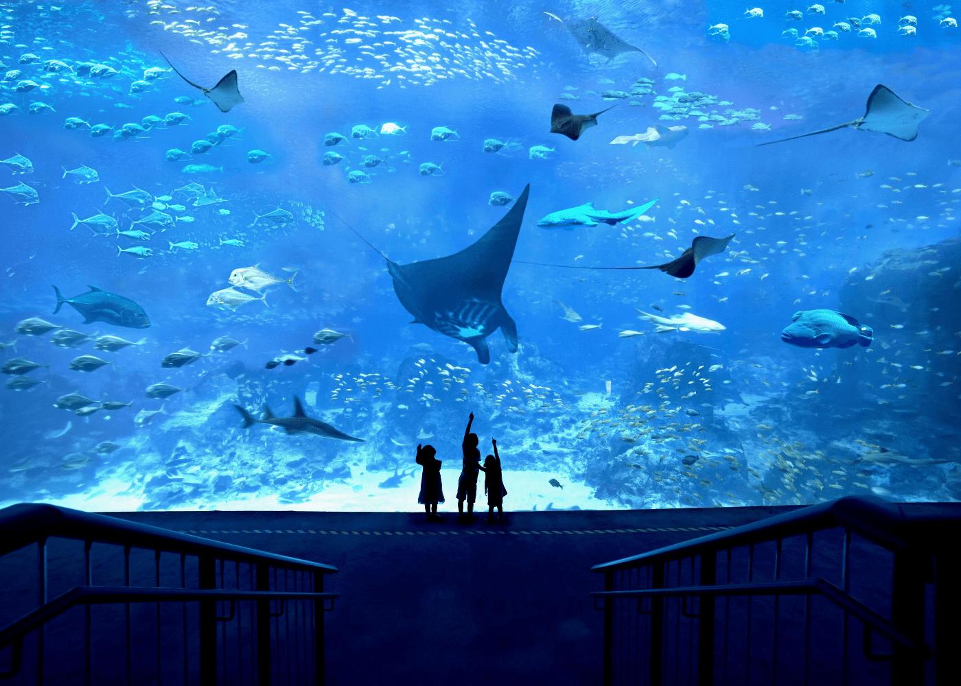 S.E.A Aquarium 2020 promos