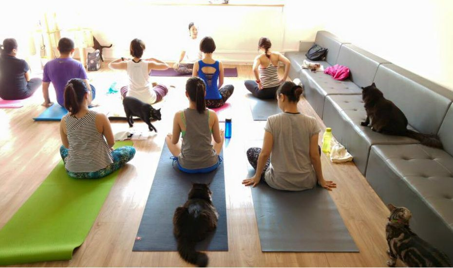 Alternative yoga: Experience a new kind of zen with beer, cats and jokes