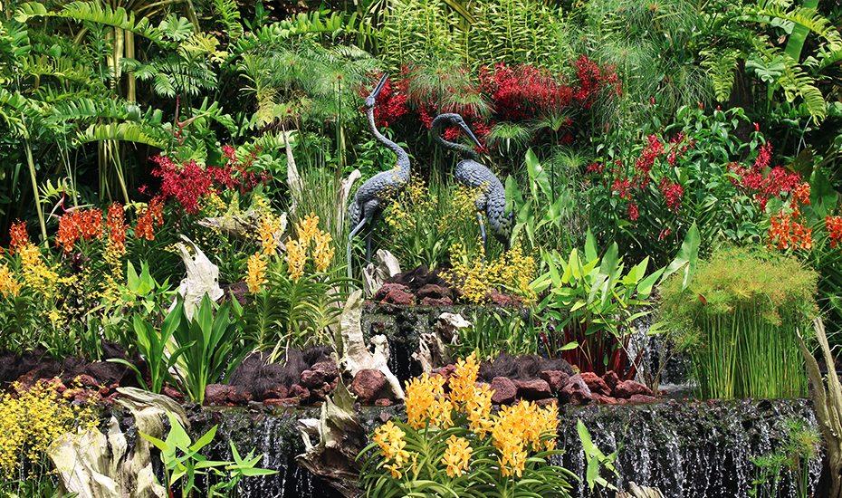 Singapore Botanic Gardens: National Orchid Garden