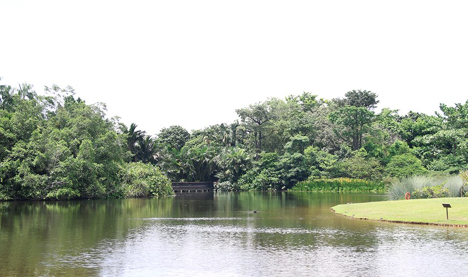 Singapore Botanic Gardens guide: Eco Lake
